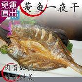 漢哥水產 黃魚一夜干5尾組250g/尾【免運直出】