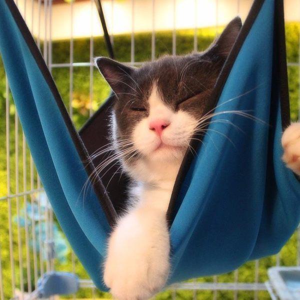 卡通貓 貓吊床貓籠吊床貓墊子貓床寵物床墊貓窩貓咪用品貓掛床  SMY8929【男人與流行】