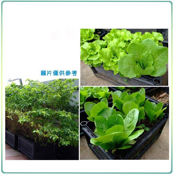 【綠藝家】DIY家庭栽培組//型號D01