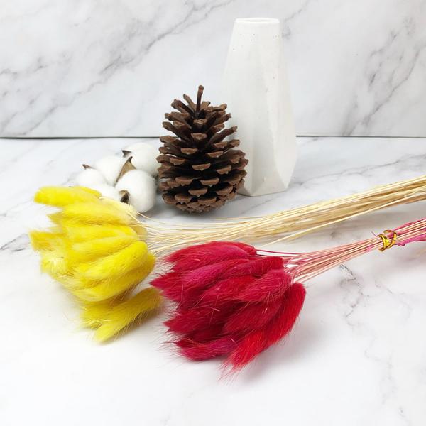 進口乾燥天然兔尾草-乾燥花圈 乾燥花束 拍照道具 手作素材 室內擺飾 乾燥花材 文菁風-38元/束