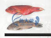 C1【魚大俠】FH102三去紅條/燕條石斑魚(約400g/尾) 買三送一