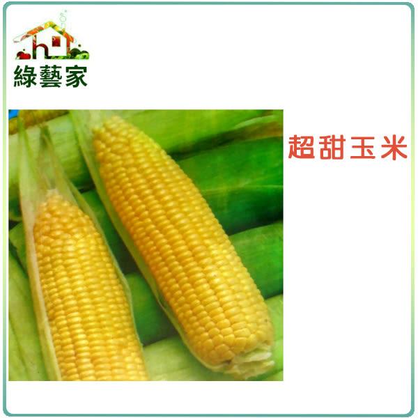 【綠藝家】大包裝G07.超甜玉米 (黃穗)種子70克(約580顆)
