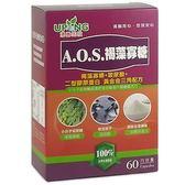 AOS褐藻寡糖(60粒) 【湧鵬生技】(一次買2盒再加送1盒)