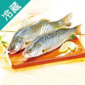 台灣大七星鱸700G上/尾【愛買冷藏】