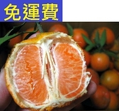 全台最甜小橘子 桶柑 花蓮無毒農業8斤 原住民品種原生種 清明節禮盒 3月水果