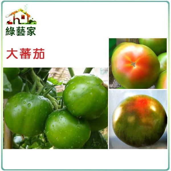 【綠藝家】大包裝G19.大蕃茄(一點紅品種)種子1.65克(約500顆)