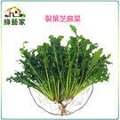 【綠藝家】大包裝A64.裂葉芝麻菜種子1...