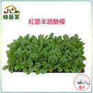 【綠藝家】K30紅脈羊蹄酸模種子(紅脈酸...