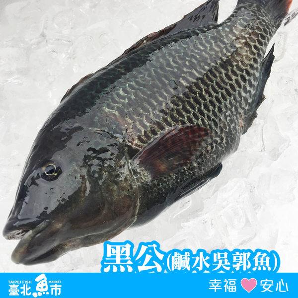 【台北魚市】  黑公(鹹水吳郭魚/海吳郭)  450g±10%