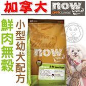 【zoo寵物商城】now鮮肉無穀小型幼犬狗糧6磅2.72kg