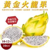 【果農直配-全省免運】台灣黃金火龍果10斤±10%(10-12入)