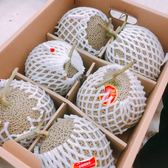 【果之蔬】韓國高糖度特大哈密瓜1入禮盒-約1.5公斤/盒(日本品種)