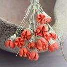 永生花花材,帶枝彩色開心果,單支價