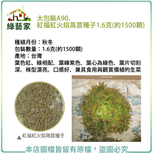 【綠藝家】大包裝A90.紅福紅火焰萵苣種子1.6克(約1500顆)