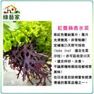 【綠藝家】A76.紅蕾絲香水菜種子100...