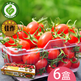 產銷履歷-百分百甘ㄚ蜜-玉女小蕃茄6台斤含運組