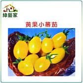 【綠藝家】G21.黃果小蕃茄種子7顆