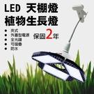 植物燈生長光譜製定 角度可調 50瓦夾燈...