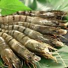 優鮮生態黑虎草蝦 (280g±)10尾裝...