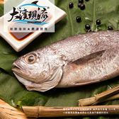 野生現撈 黑喉魚 ( 特大尾 600g±10%_尾 )【大溪現流】