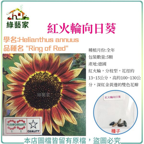 【綠藝家】H48.紅火輪向日葵種子5顆
