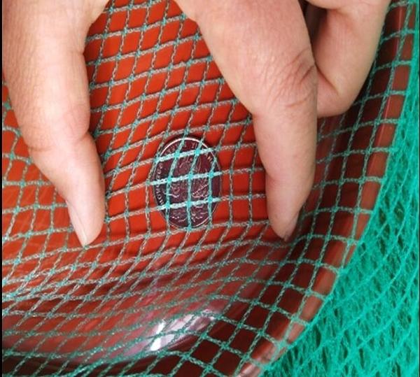 養殖網菜園翠綠色防鳥網
