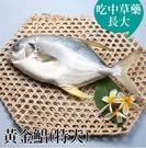 台江漁人港 黃金錩900g/包