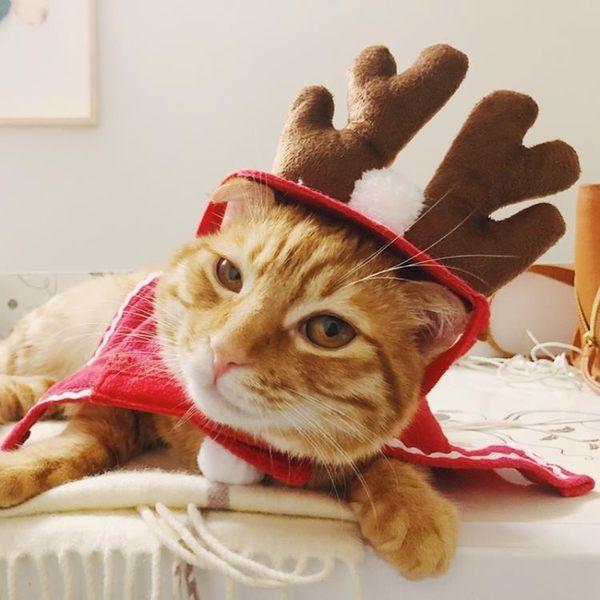 狗狗貓咪帽子貓頭套搞笑頭飾寵物圣誕帽可愛的圣誕節裝扮斗篷套裝