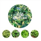 〔超值團購〕CARMO夏日蔬菜育苗小套組(含土盆&種子)【ZZ008】