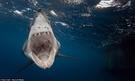 鯊鯊ESD 商品測試!