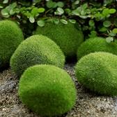 一佳寵物館 仿真青苔蘚石頭植絨樹脂綠藻球微景觀綠草球綠毛石水草布景裝飾