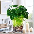 北歐陶瓷花器銅錢草辦公室仿真綠色植物客廳室內擺件裝飾花瓶盆栽 母親節禮物
