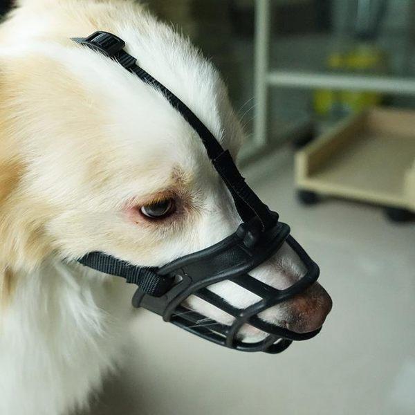 寵物狗狗嘴套狗口罩狗狗防咬口罩大型犬嘴套小型犬金毛邊牧防亂吃