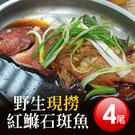 【屏聚美食】海底紅金-峇里島-野生紅鰷石斑魚X4條(450g±50g/條)