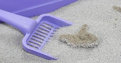 ☆國際貓家,頻繁清理貓砂盆+多貓家庭專用貓砂☆BOXCAT灰標 急速凝結小球貓礦砂12L*2