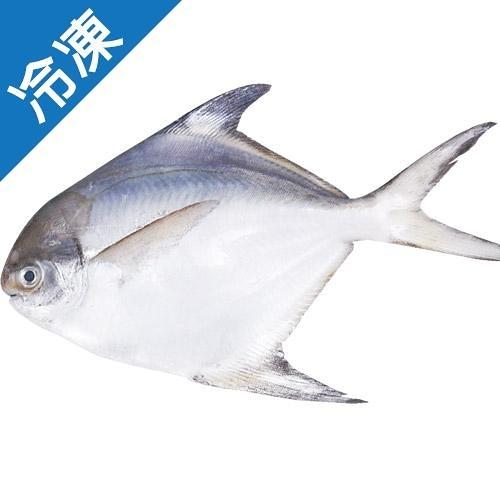 冷凍大白鯧500G上/尾(真空包)【愛買冷凍】