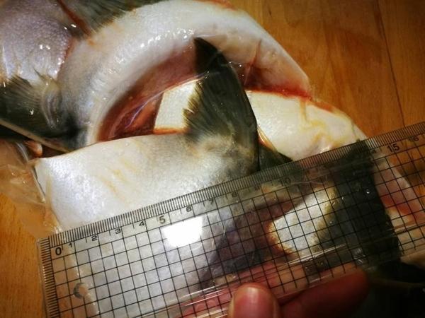 【禧福水產】日本青甘魚下巴/鰤魚下巴◇$特價1000元/1kg±10%/5-7片◇最低價 頂級用團購 可批發