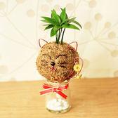 【迎光】喜氣招財貓苔球