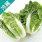 【台灣】鮮採包心白菜1粒(700g/粒)...