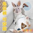 兔子生理褲穿戴小型寵物兔子尿褲穿戴尿布防尿【淘嘟嘟】