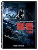 【停看聽音響唱片】【DVD】鱷魔