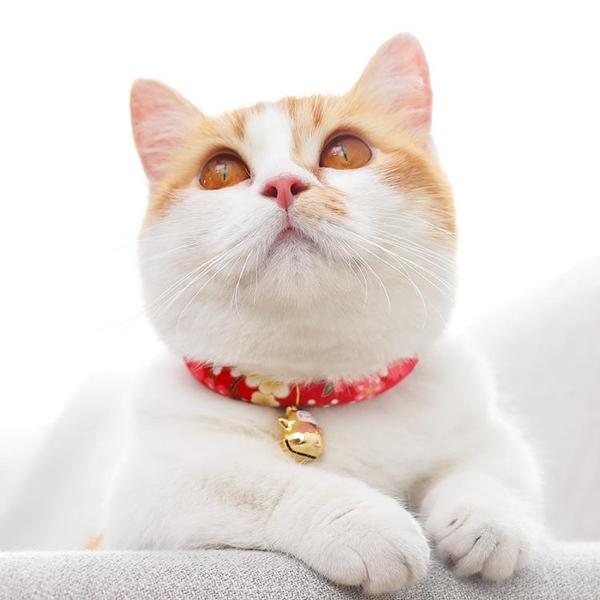 貓咪項圈可愛貓鈴鐺貓頸圈脖圈項鏈手工和風項圈小貓項圈貓咪飾品