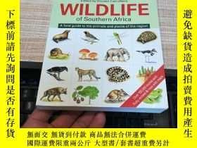 二手書博民逛書店WILDLIFE罕見OF SOUTHERN AFRICA 南部非洲野生動物植物圖鑒 a field guide