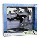 《 COLLECTA 》海洋動物組 B╭★ JOYBUS玩具百貨