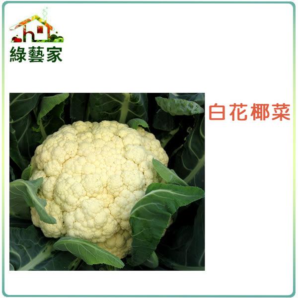 【綠藝家】B03.白花椰菜種子50顆