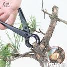 盆景球節剪球鉗盆栽樹瘤樹節修剪鉗專業園藝花藝制作造型養護工具 自由角落