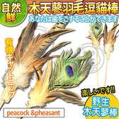 【zoo寵物商城】自然鮮系列》木天蓼羽毛逗貓棒NF-031/32