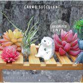 ⓒ紅犀牛 Tillandsia pruinosa—空氣鳳梨【KF092】