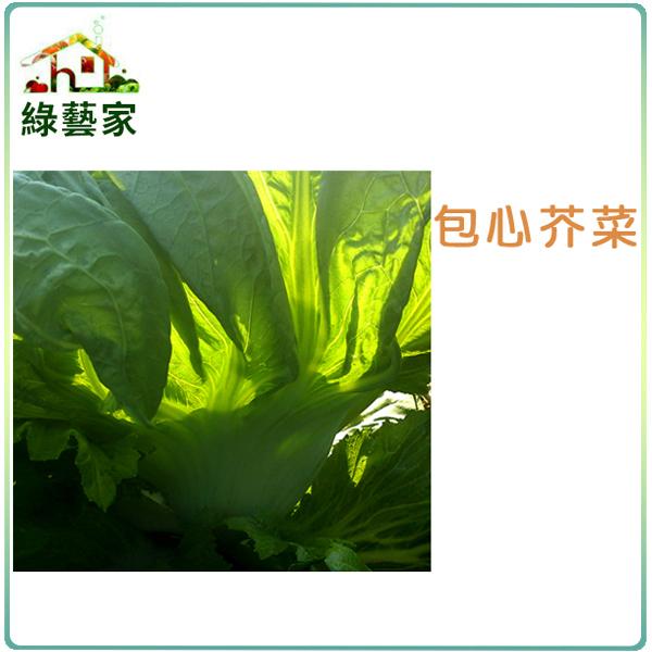 【綠藝家】A26.包心芥菜種子1000顆 (長年菜)
