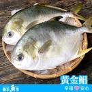 【台北魚市】天和鮮物 黃金鯧 500g...